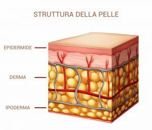 pelle-anatomia