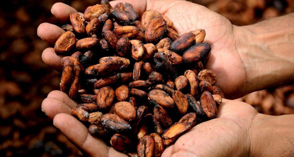 fave di cacao ricche di flavonoidi